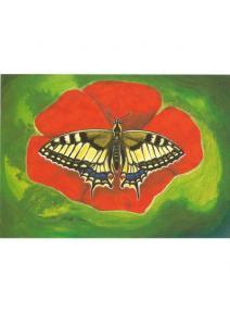 Postal Mariposa Papilionidae