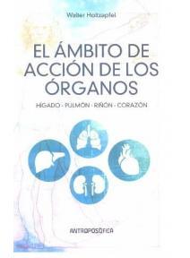 El ámbito de acción de los órganos: Hígado, Pulmón, Riñón, Corazón