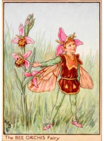 Postal de madera Hada Orquídea abeja